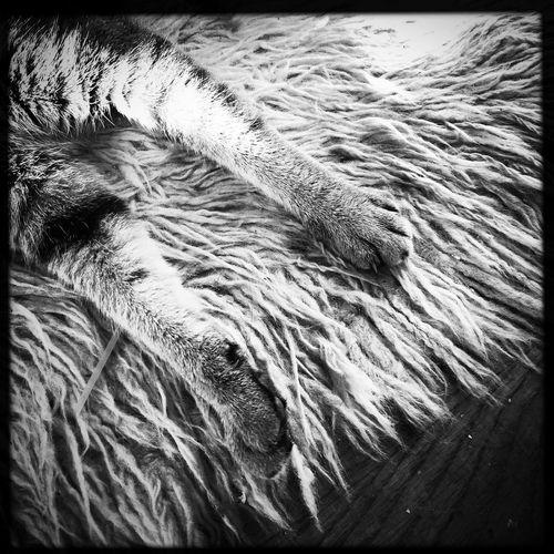 Flokati Rug Cat Hipstamatic