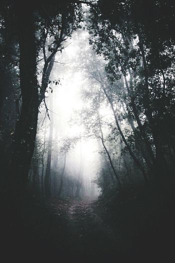 Halloween Halloween Horrors Halloween EyeEm Forest Path Forest Nature Landscape Inspiration Fresh Air Traveling Mountain Carpathians Lifestyles Adventure Mountains Travelung Mood Weekend Romantic Earth Happy Happy People Happiness Good Day Sky Sky And Clouds Miserable