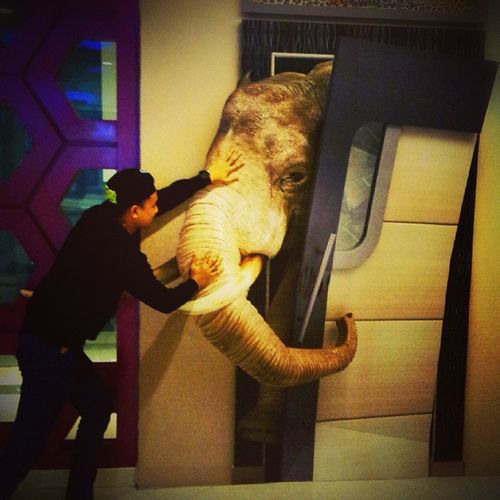 Get outta here!!.. This is not your cage!! 3D 3Dpainting PavementArt Anamorphic Elephant