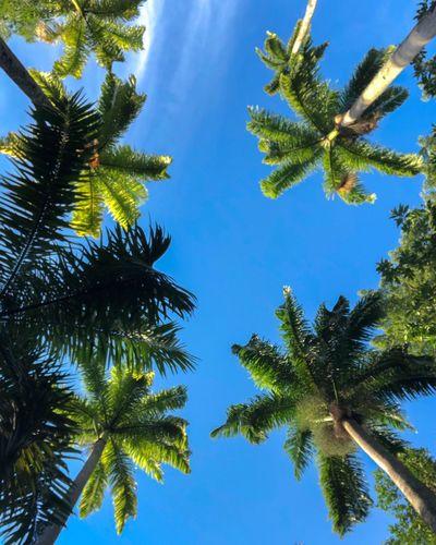 Um olhar de forma diferente faz toda diferença. Riodejaneiro Jardimbotanicorj Tree Low Angle View Sky Growth Beauty In Nature Tranquility Nature Blue Day Palm Tree Tropical Climate First Eyeem Photo