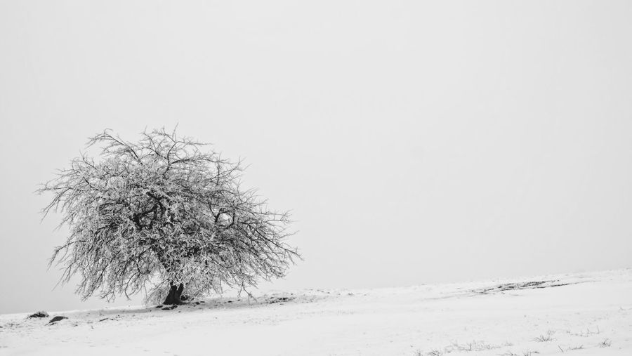 Plant Copy Space Tree Snow Cold Temperature Winter Beauty In Nature Landscape Land Sky Field Clear Sky Scenics - Nature Tranquility Nature No People Outdoors Day Tranquil Scene Environment