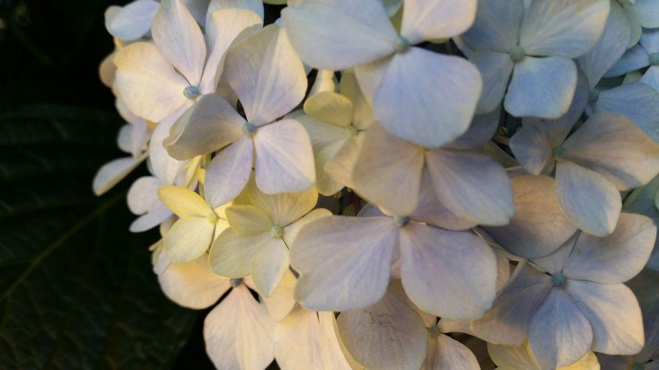 花、行灯。