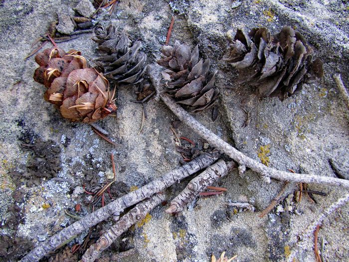 Ute Offerings Close-up Detail Gray Ground Nature Outdoors Pinecones Sacred Trail Twigs And Branches Ute Indians