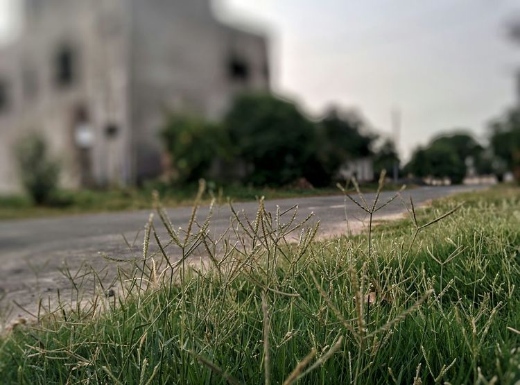 A Walk To Remember 😊 The grass looks blurrier on the other side. 😀 Check This Out Taking Photos EyeEm Best Edits EyeEm Best Shots Eye4photography  Popular Photos EyeEm Gallery EyeEm Landscape Getting Inspired