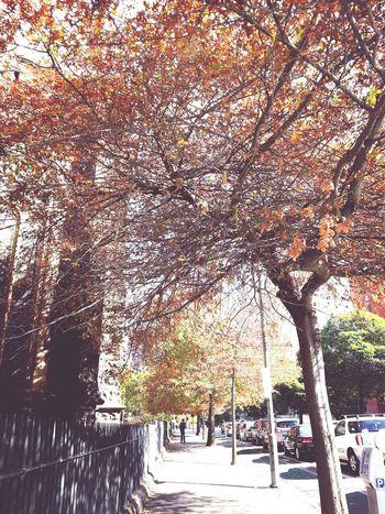 Streetphotography Photography EyeEmyon Tree way