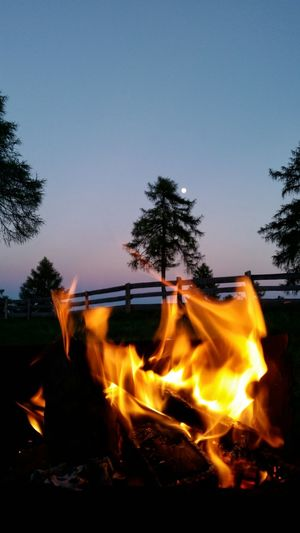 Sky Night Evening Fire Moon Mountain South Tyrol Wiese  Camping Geniesen Living With The Nature Live Love Wood Fire Eating Wood The Essence Of Summer Outdoor Event Stay Out Zaun Tree