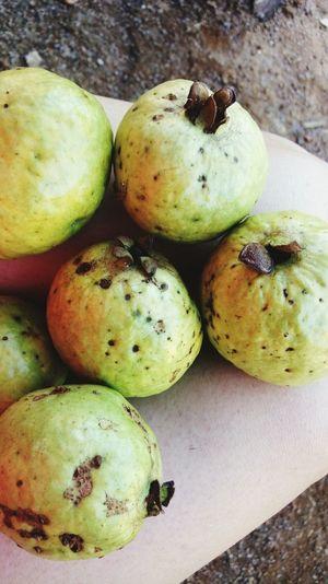 goiabas frutas