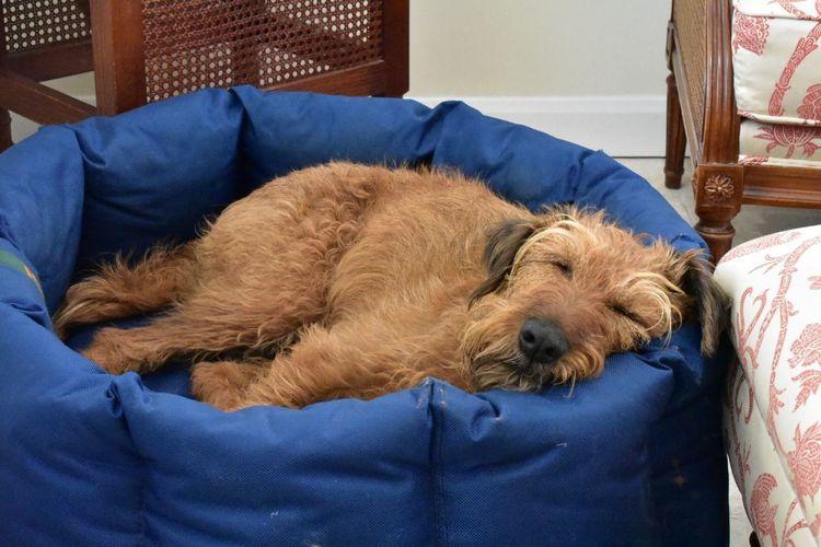 Sleeping Irish