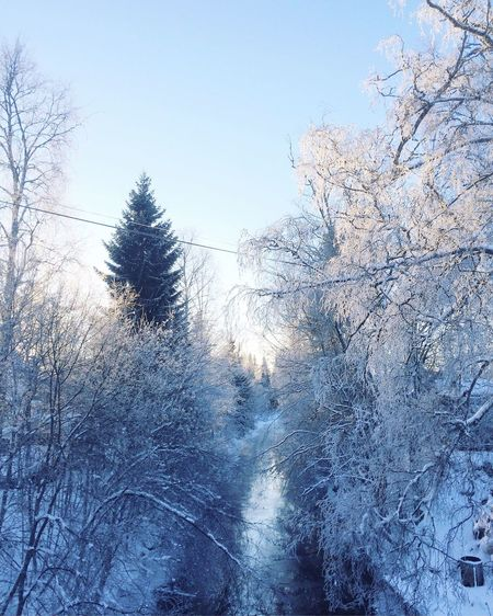 Nature Snow Cold Temperature Tree Winter Bare Tree Beauty In Nature Tranquility Outdoors Scenics Clear Sky Branch Tranquil Scene Day Sky Cold