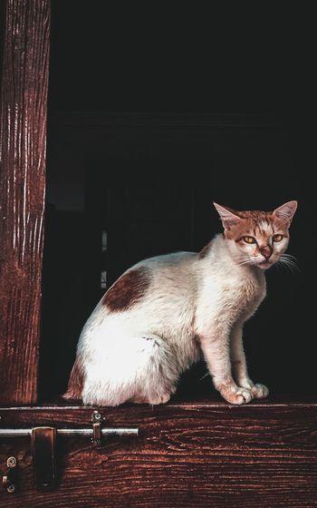 Cat sitting at