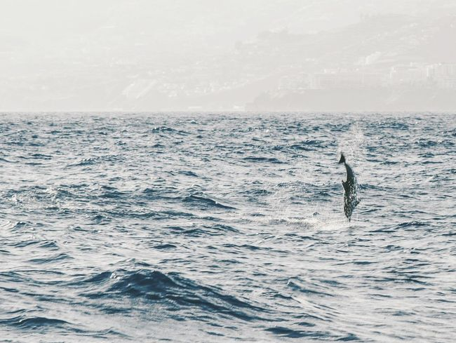 Dolphin Sea Adventure Tranquility Nature Dolphin Jumping Landscape Vacations Horizon Over Water Outdoors Beauty In Nature Water Sky The Traveler - 2018 EyeEm Awards