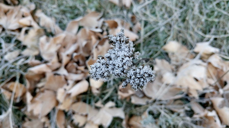 Close-up of snow on leaf during winter