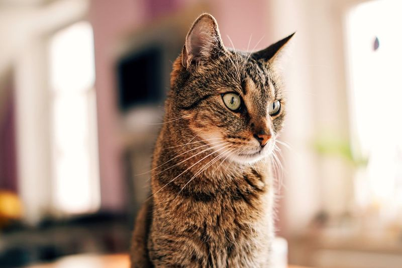 Cats Cat EyeEm Selects One Animal Domestic Cat Pets Domestic Animals Animal Themes Feline Mammal Focus On Foreground No People Close-up Indoors  Day