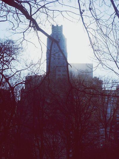 Buildings, trees, urban, no people, winter, city, New York,