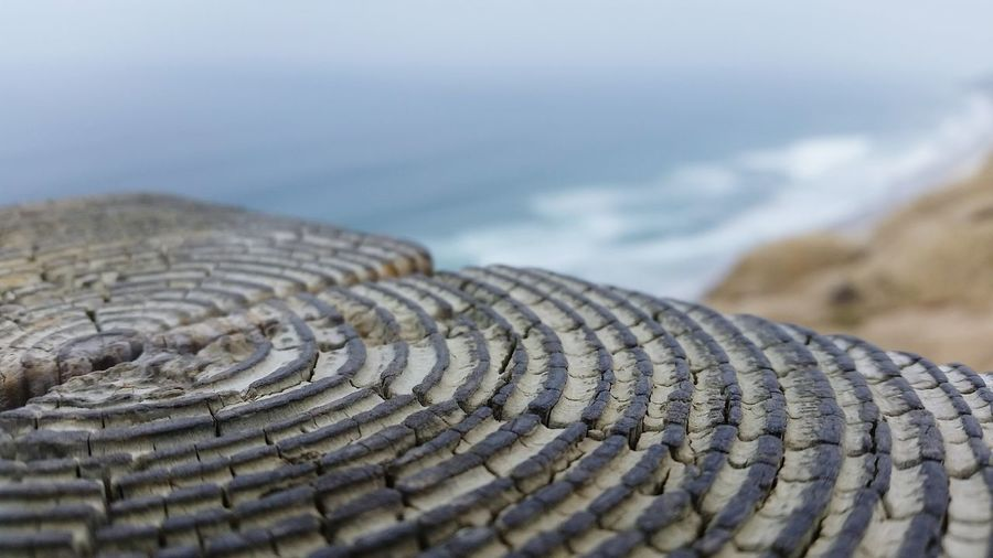 Close-Up Of Tree Ring With Sea In Background