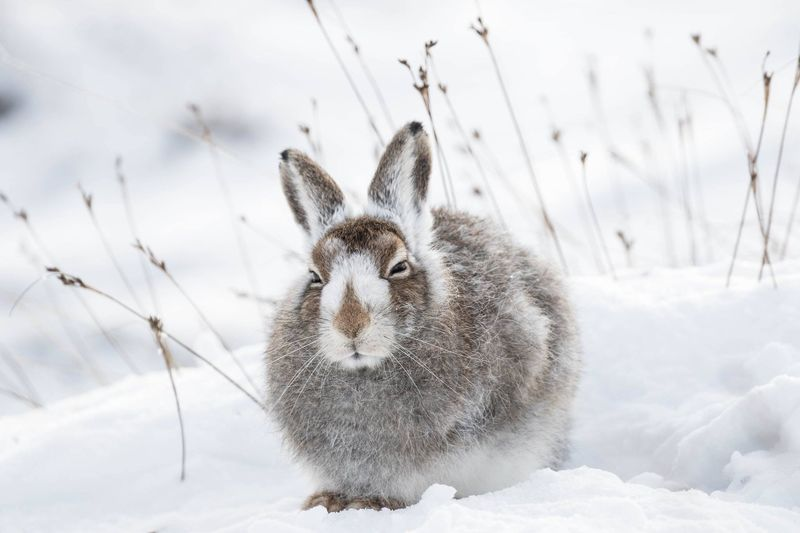 Close-Up Of Rabbit On Snow Covered Field