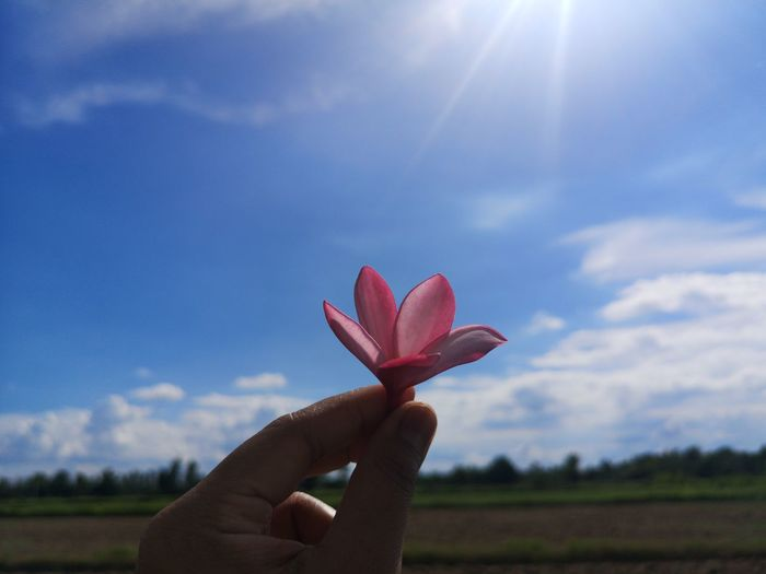 Close-up of hand holding pink flowering plant against sky