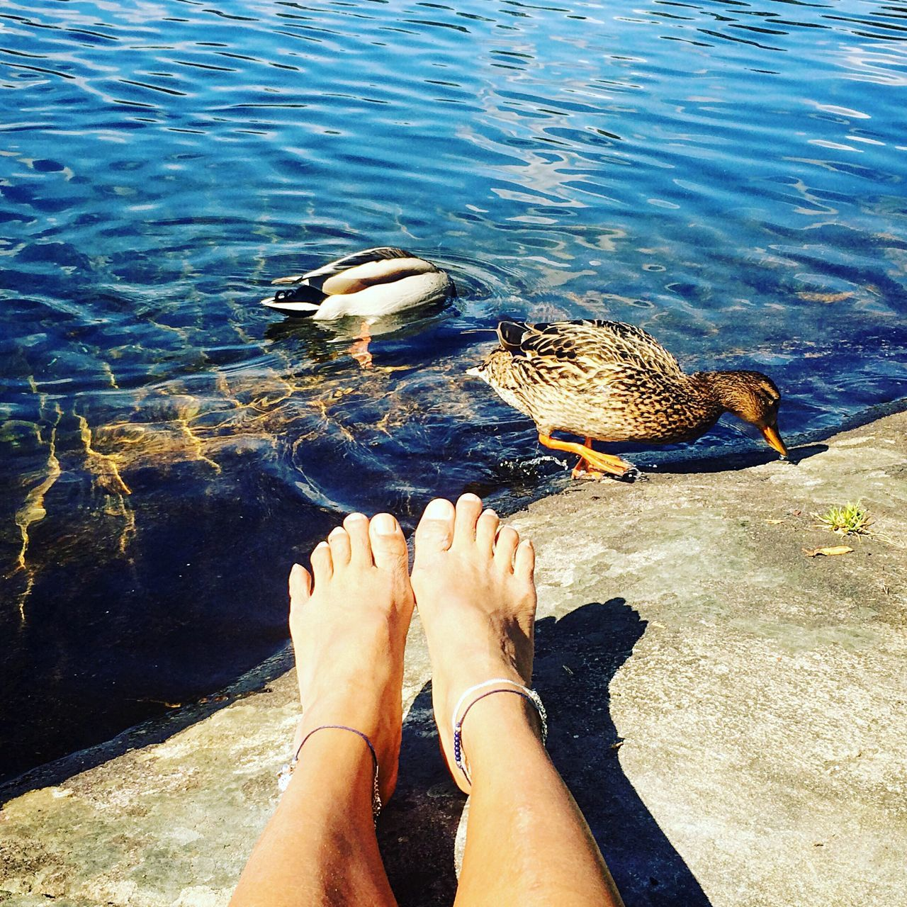 Low Section Of Legs By Ducks