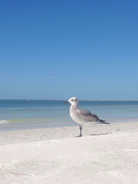took a photo,at the beach,seagull