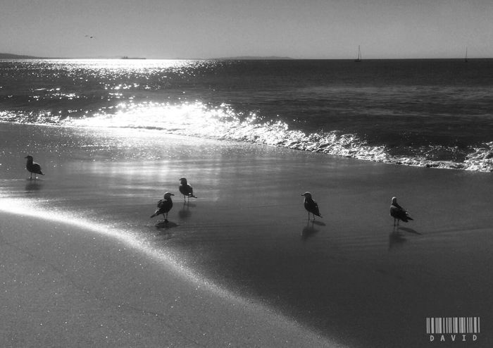 Little Birdies Light And Shadow Sunshine Water Reflections Nature Enjoying The Sun Blackandwhite Monochrome Beach Ocean Silhouette