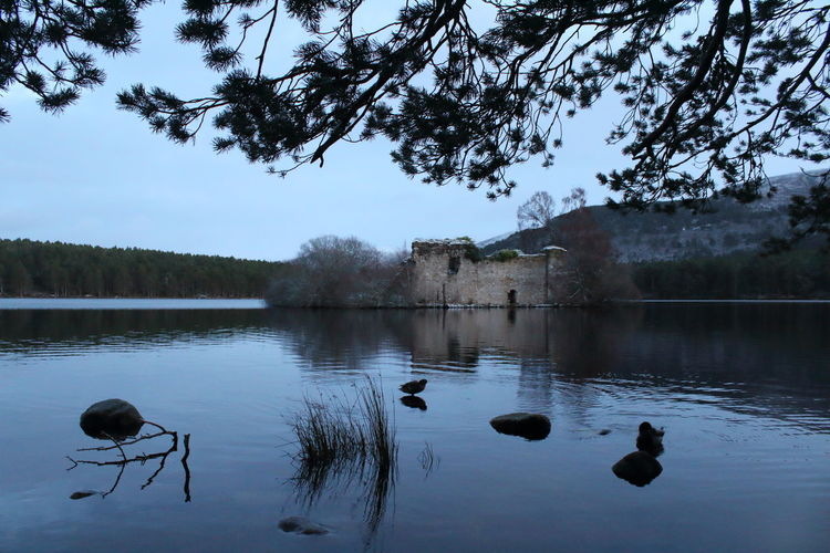 Shades Of Winter Cairngorms National Park Castle Highland Loch An Eilein Scotland Animal Themes Animal Wildlife Animals In The Wild Architecture Bird Black Swan Built Structure Castle Ruin Day Lake Nature No People Outdoors Reflection Scenics Sky Swan Swimming Tree Water