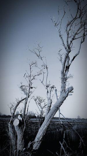 Nachmittagsspaziergang Zweige Nature Nature Photography Black & White Baum Tree Tree Trunk Wege Und Strassen Wegesrand Road Flying Flock Of Birds Drop Water
