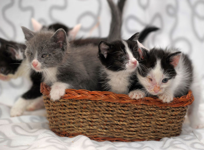 Close-up of cats relaxing in basket
