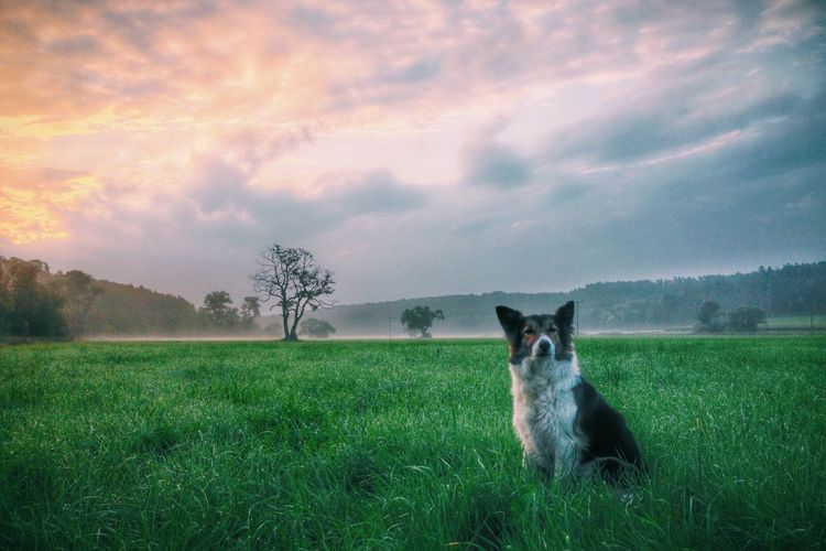 Dog Sitting In Field