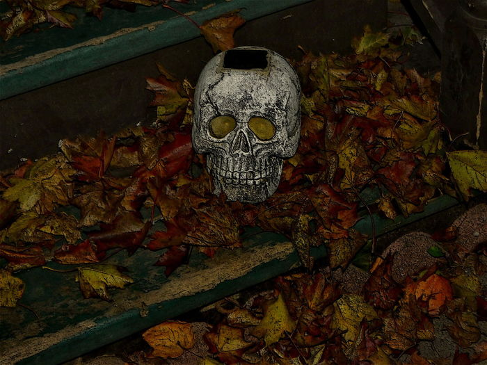 Halloween Scull. Close-up Halloween Scull Haunted Mansion Human Skull Indoors  Night Scary Looking Staring At Me