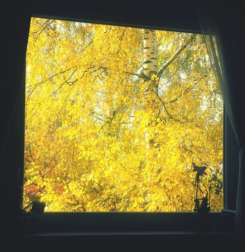 The summer in autumn..Autumn Colors Autumn Beauty Beautiful Day Like4like Lifeisbeautiful Yellow Autumn Fall Beauty Bright Colours Amazing Autumm♥ Lovely Yellow Tree EyeEm Nature Lover Autumn 2015