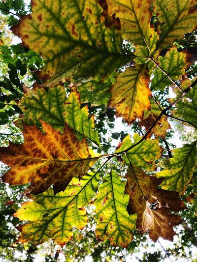 Tree Leaf Plant
