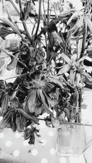 Dead or alive Dead Plant Dead Flowers Blackandwhite Flowers Photography