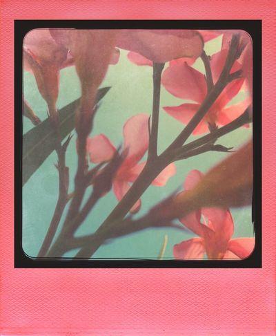 Pink Garden NEM Landscapes NEM GoodKarma NEM Avantgarde NEM Submissions EyeEmFlower