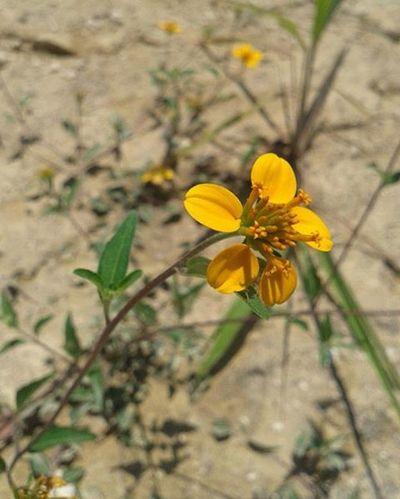 Clap VSCO Vscocam Flowers Sun Earth Igersmexico