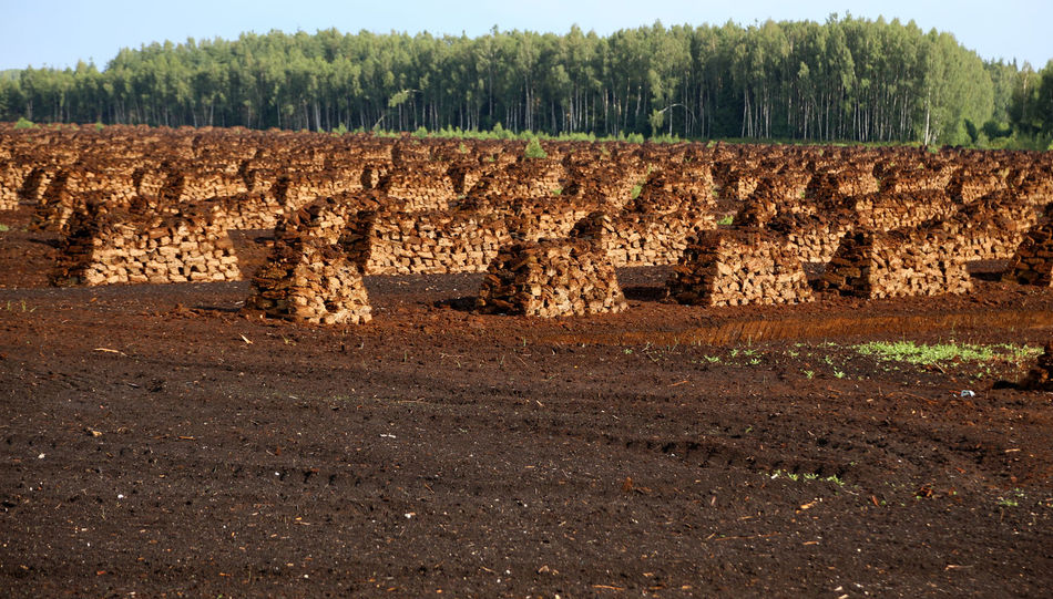 peat is stacked in rows waiting for transport in a forest in Latvia. Torfabbau Bog Peat Latvia Travelling The Baltic States Torffeld Fossil Fuel Swamp Fossil Fuels Evening Light Heating Period Agriculture Peat Bog Lagerung Harvesting Peat Peat Mining Renewable Energy Peat Peat Field Peat Extraction Travelling Brennstoff Torffabrik Lettland  Wald Und TorfTorfballen