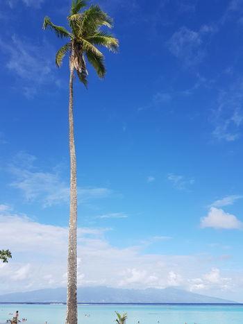 Blue Sea Beach Palm Tree Water Vacations French Polynesia Ilsland Mer Tahiti Moorea Vacations Travel Destinations Palm Tree