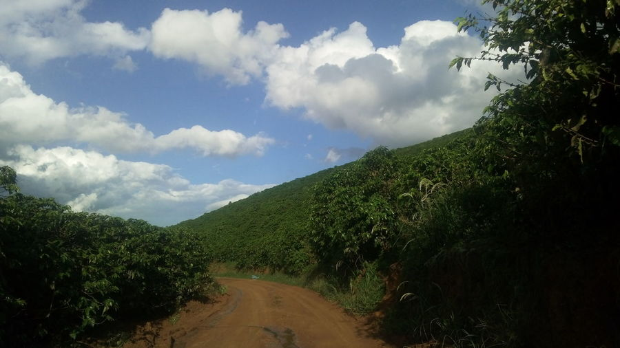 coffe Brasil ☕🍵 Tree Cloud - Sky Nature Rural Scene Landscape Sky Agriculture Vacations Outdoors Scenics Beauty In Nature No People Mountain Summer Tea Crop Day Beauty City Freshness Be. Ready. EyeEmNewHere