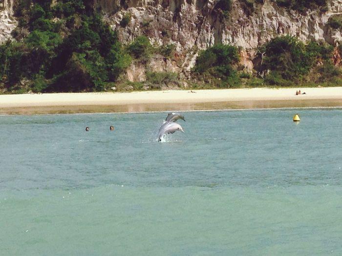 Brazil Dolphins