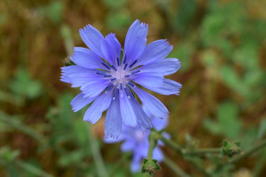 Beauty In Nature Fleur Bleu Flower Flowering Plant Flowers Petal Plant Purple