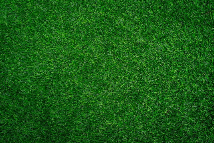 Full frame shot of grass. Green Color Backgrounds Full Frame Grass Plant Textured  Lawn No People Pattern Nature Field Sport Directly Above Close-up Environment Plain Foliage Playing Field Growth Meadow Blank Outdoors Turf Textured Effect Clean Grass Backgouun