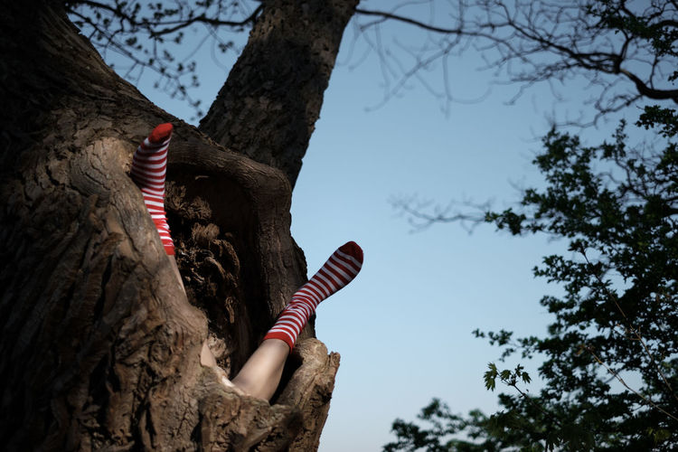 TFP - Shooting (failed) Tree Tree Trunk Plant Trunk Nature Low Angle View Sky Focus On Foreground Branch Day No People Outdoors Legs Falling Socks Growth Human Body Part My Best Photo