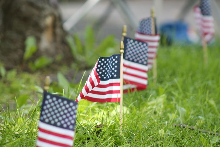 Close-up of small american flags on field