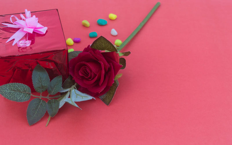 High angle view of pink rose on red table