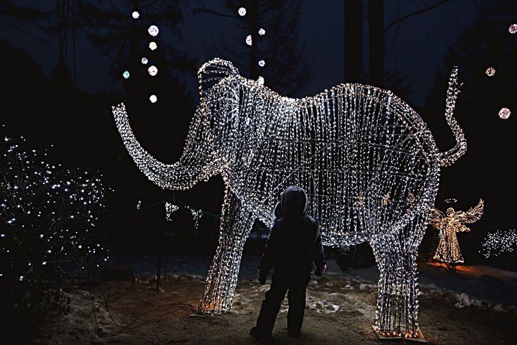 Silhouette Elephant Childhood Night Standing Christmas Decoration Illuminated Child People Nature Outdoors Animal Trunk Mammal One Person Animal Themes Adult Eliphant