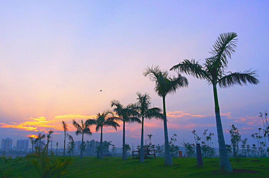 Beauty In Nature Blue Cloud Coconut Palm Tree Grass Green Color Growth Horizon Over Water Idyllic Landscape Majestic Nature No People Non-urban Scene Orange Color Outdoors Palm Tree Remote Scenics Sky Sunset Tranquil Scene Tranquility Tree Tree Trunk