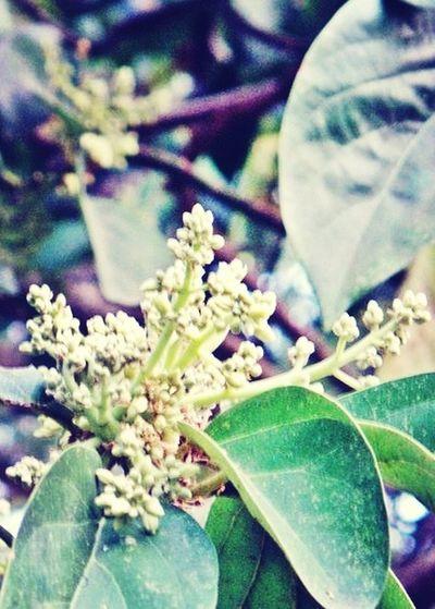 iInspiration : Avocado Tree : Avocado Love : Avocado Flower
