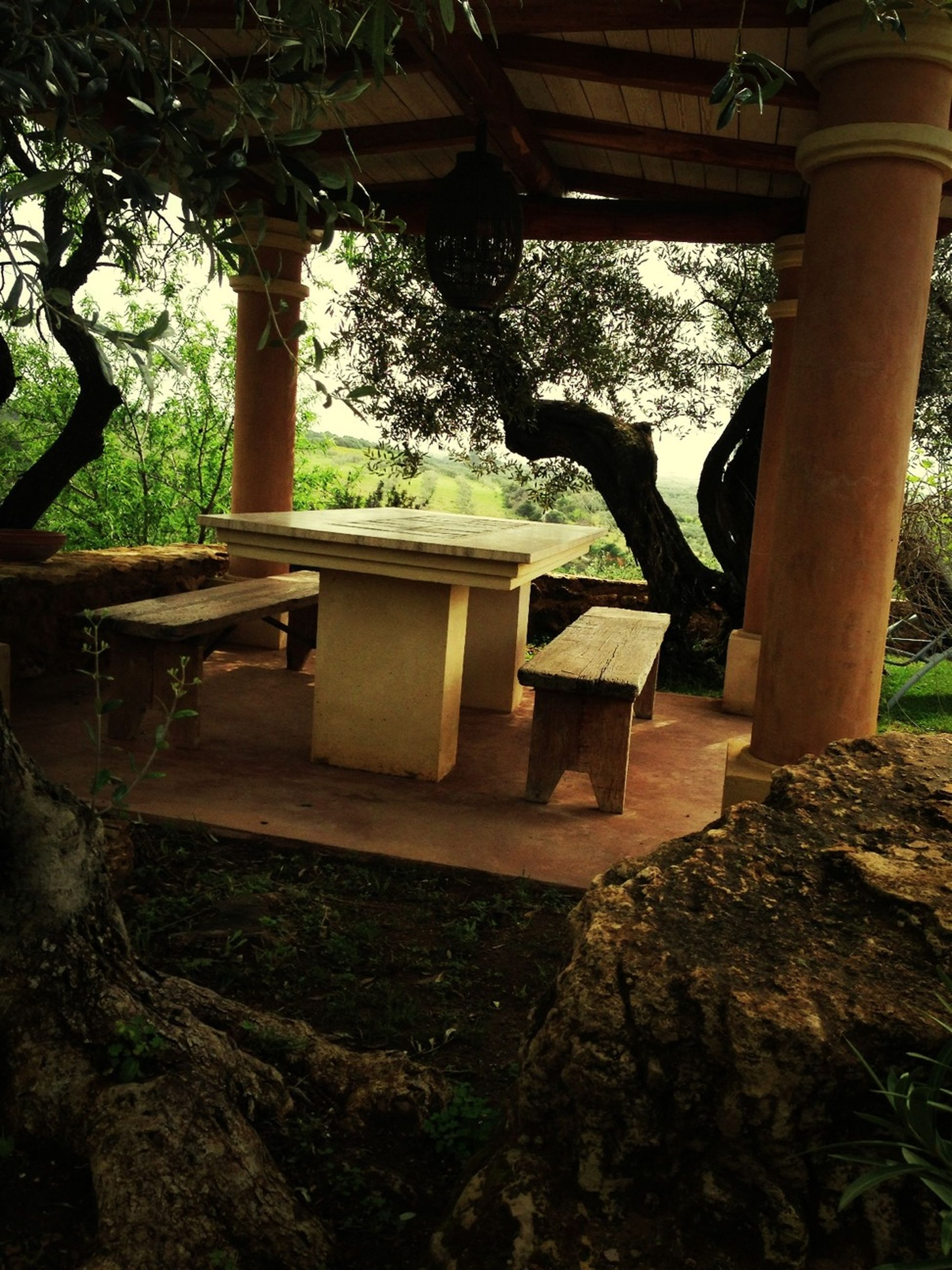 tree, tree trunk, sunlight, chair, indoors, day, built structure, growth, nature, table, park - man made space, absence, branch, no people, wood - material, architecture, shadow, tranquility, front or back yard