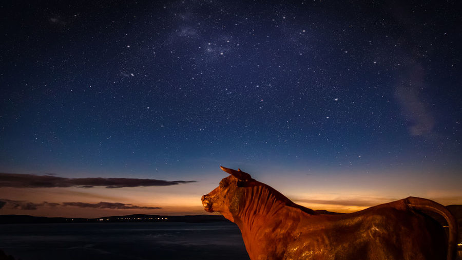 View of a horse against the sky at night