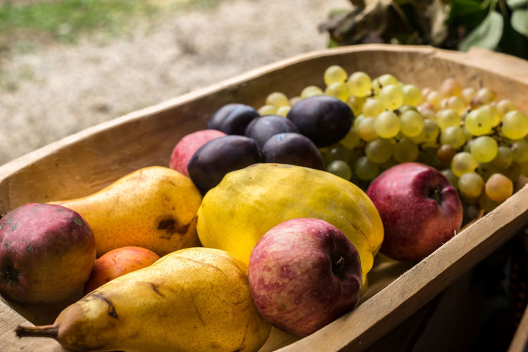 fresh fruit in wooden trough Fresh Fruit In Wooden Trough Food Food And Drink Fruit Healthy Eating Wellbeing Freshness Day Container No People Close-up Focus On Foreground Still Life Grape Large Group Of Objects Selective Focus High Angle View Variation Choice Apple - Fruit Harvesting Ripe