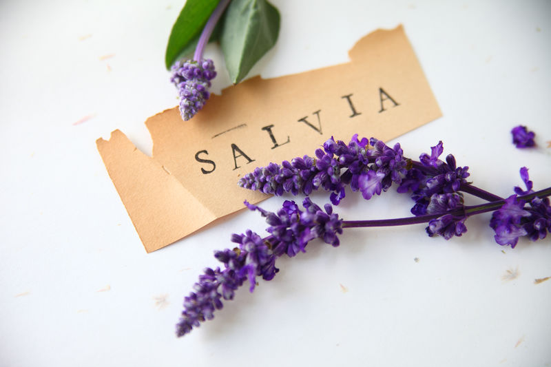 High Angle View Of Purple Flowers And Text On Table